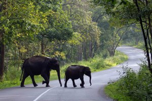 Wayanad Muthanga Wildlife Sanctuary