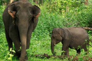 Wayanad Tholpetty Wildlife Sanctuary
